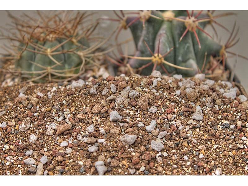 Универсален субстрат за кактуси 5 литра