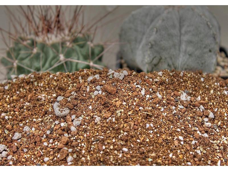 Специализиран варовиков субстрат за кактуси 5 литра